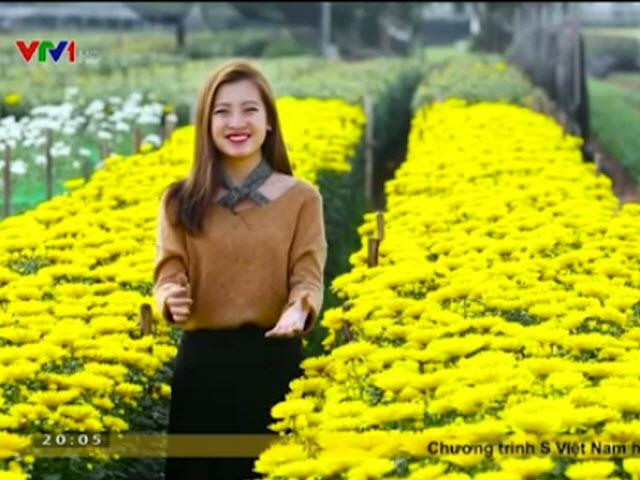 """""""Vương quốc"""" hoa cúc vàng đẹp mê hồn ở Nam Định"""