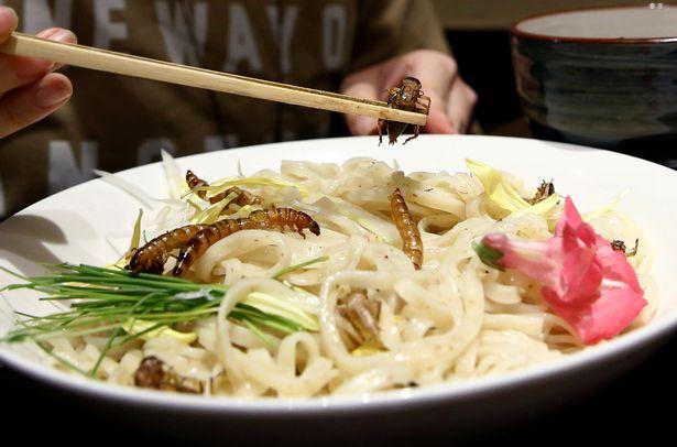Phát hoảng với món mì côn trùng đang gây sốt tại Nhật - 1