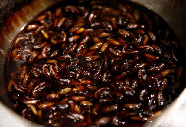 Phát hoảng với món mì côn trùng đang gây sốt tại Nhật - 3