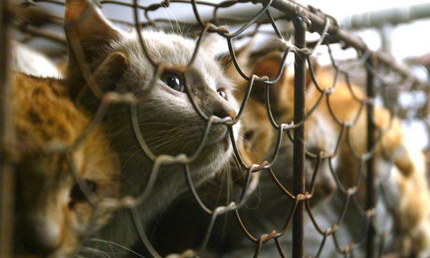 Nơi đầu tiên châu Á cấm ăn thịt chó - 3