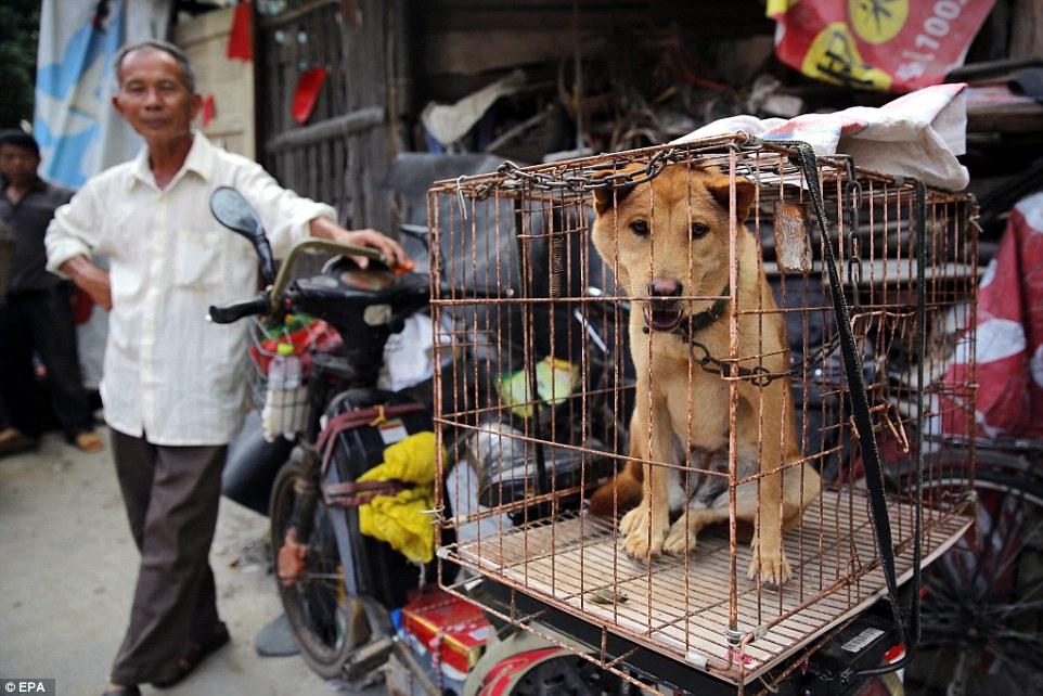 Nơi đầu tiên châu Á cấm ăn thịt chó - 2