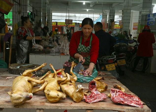 Nơi đầu tiên châu Á cấm ăn thịt chó - 1