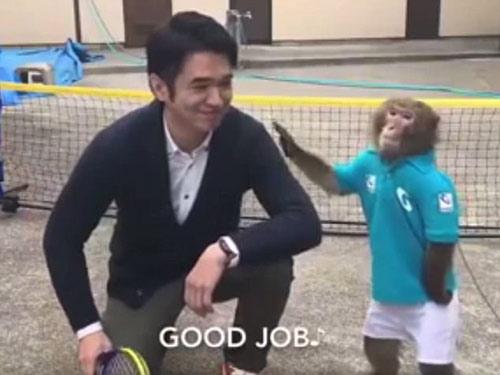 Lên lưới như Federer, chú khỉ khiến fan tennis choáng - 3