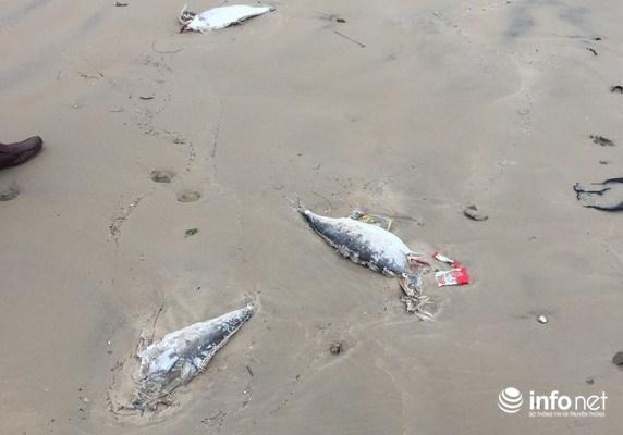 Xuất hiện cá chết trôi dạt vào bờ biển Vũng Áng - 1