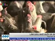 Tài chính - Bất động sản - Làm giàu nhờ nuôi gà siêu trứng