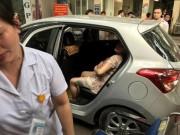 Tin tức trong ngày - CSGT mở đường cho sản phụ đẻ con trên ô tô tới viện an toàn