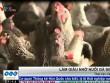 Làm giàu nhờ nuôi gà siêu trứng