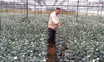 Nông dân xuất khẩu hoa sang Nhật, Hàn - 1
