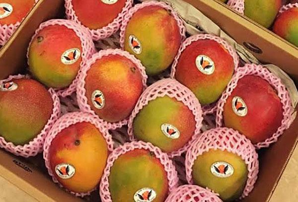 """Ưa trái cây Nhật """"sang chảnh"""": Người Việt mạnh tay chi tiền triệu - 6"""