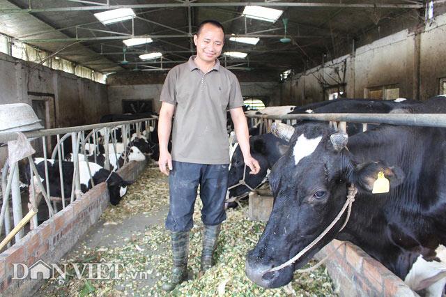 Trai Kinh Bắc nuôi 20 bò sữa vừa làm vừa chơi lãi 2 triệu đồng/ngày - 1