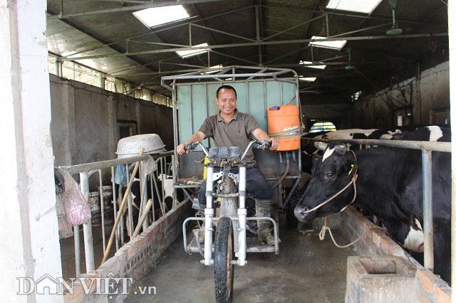 Trai Kinh Bắc nuôi 20 bò sữa vừa làm vừa chơi lãi 2 triệu đồng/ngày - 2