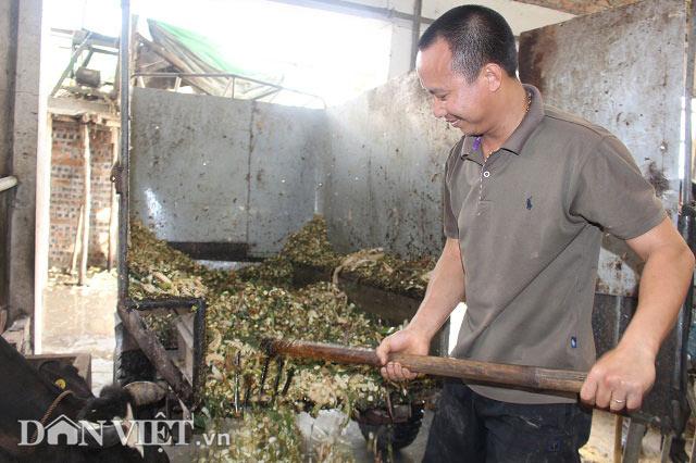 Trai Kinh Bắc nuôi 20 bò sữa vừa làm vừa chơi lãi 2 triệu đồng/ngày - 3