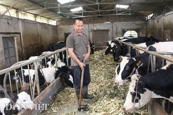Trai Kinh Bắc nuôi 20 bò sữa vừa làm vừa chơi lãi 2 triệu đồng/ngày - 4