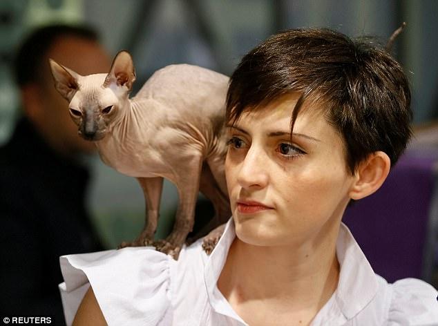 Mèo không lông, nhăn nheo như tấm giẻ giá 2.000 USD - 2