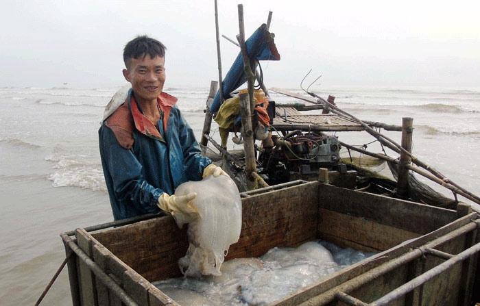 Sứa dày đặc trên biển, ngư dân Nghệ An đi vớt kiếm tiền triệu/ngày - 1