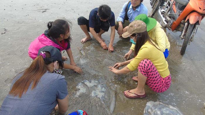 Sứa dày đặc trên biển, ngư dân Nghệ An đi vớt kiếm tiền triệu/ngày - 4