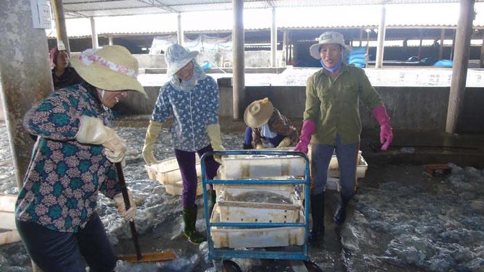 Sứa dày đặc trên biển, ngư dân Nghệ An đi vớt kiếm tiền triệu/ngày - 5