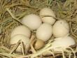 Truyện tranh: Bố có đẻ trứng không?