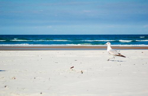 """10 bãi biển đẹp tựa """"thiên đường"""" nhưng... nên tránh xa - 4"""