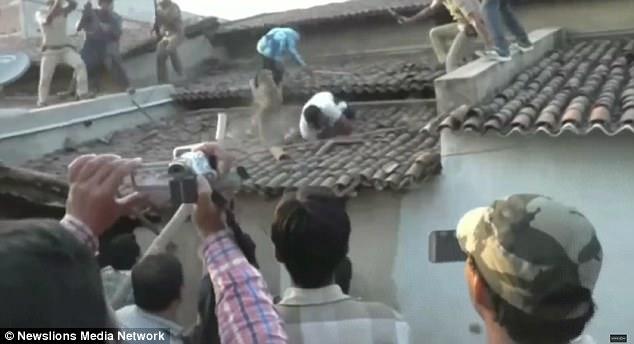 Ấn Độ: Báo sổng chuồng vồ kiểm lâm trên mái nhà - 2