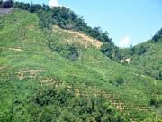 An ninh Xã hội - Phát hiện thi thể 1 phụ nữ bị trói tay, váy lật ngược trên đồi vắng