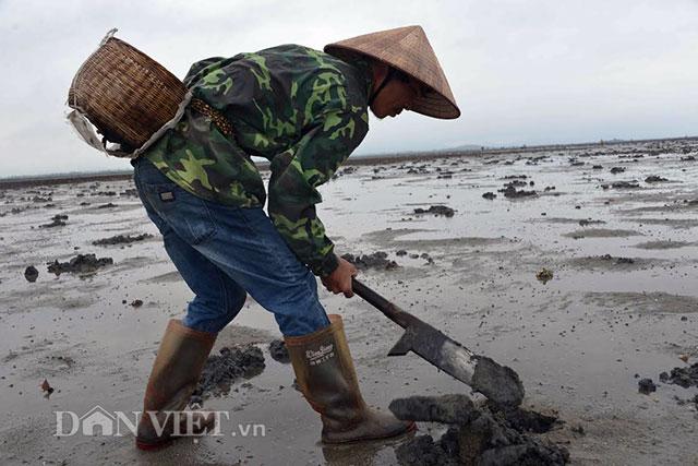 Cận cảnh giun biển nhiều nhung nhúc, dân đào mỏi tay thu tiền triệu - 5