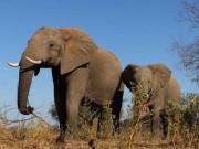 """730.000 con voi ở châu Phi """"bốc hơi"""" đi đâu?"""