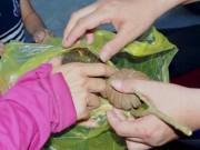 Nghệ An: 2 ngày, gần 100 HS nhập viện vì ăn quả ngô đồng