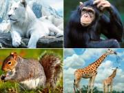 Bạn trẻ - Cuộc sống - Quiz: Miêu tả bản thân chuẩn xác bằng hình động vật cực hay