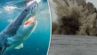 Quái vật đại dương sống ở nơi khắc nghiệt nhất Trái đất