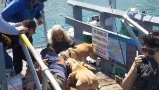 Mỹ: Cứu cún cưng, chủ bị chó dữ tấn công kinh hoàng