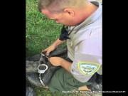 """Cảnh sát Mỹ dùng còng tay, """"trói giật cánh khuỷu"""" cá sấu"""