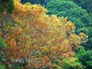 Sơn Trà đẹp miên man thời khắc giao mùa