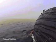 Thế giới - Cá mập mang thai gặm xác cá voi khổng lồ suốt 17 tiếng