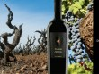 Sự trở lại của một huyền thoại – Rượu vang Pazzia Primitivo