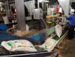 Nuôi lợn lâm nguy, vẫn chi gần 1,2 tỷ USD mua thức ăn chăn nuôi