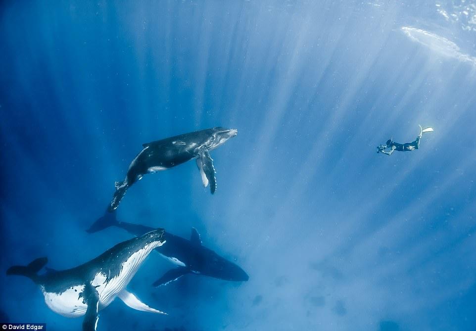 """Khoảnh khắc thợ lặn đối mặt """"thủy quái đại dương"""" - 4"""