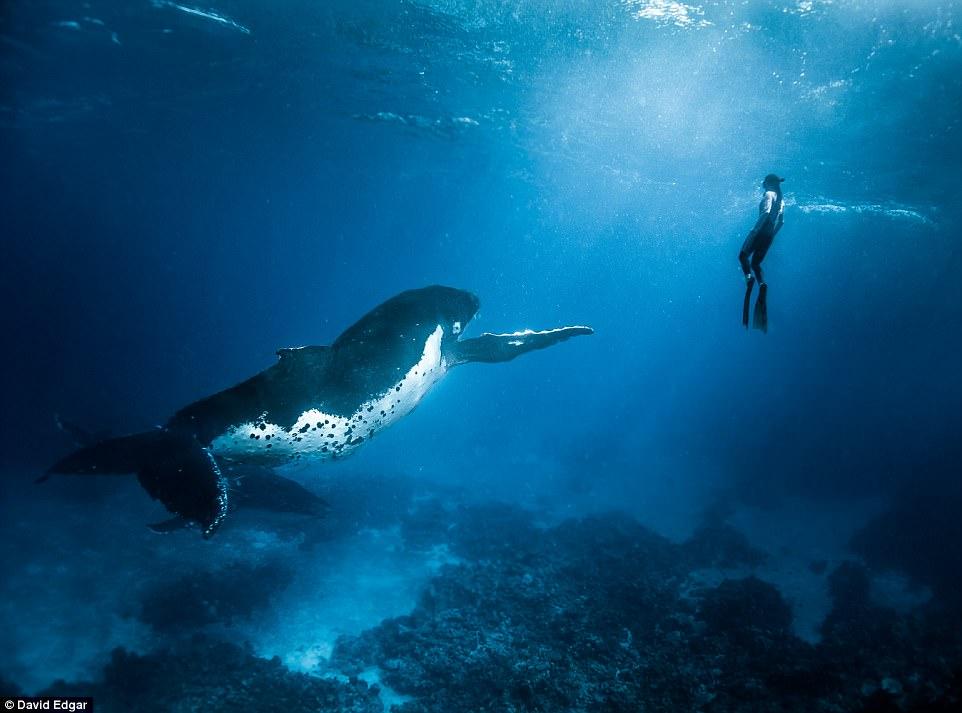 """Khoảnh khắc thợ lặn đối mặt """"thủy quái đại dương"""" - 3"""