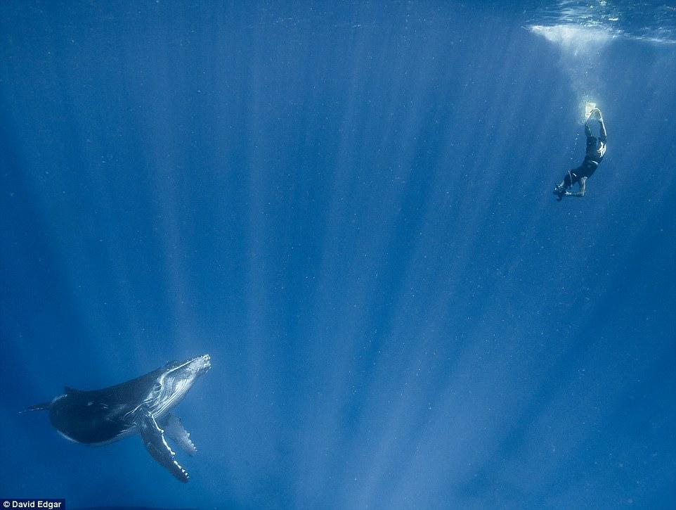 """Khoảnh khắc thợ lặn đối mặt """"thủy quái đại dương"""" - 5"""