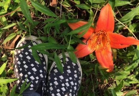 Ngắm hoa gạo đỏ rực trong rừng Cúc Phương - 10
