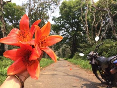Ngắm hoa gạo đỏ rực trong rừng Cúc Phương - 11