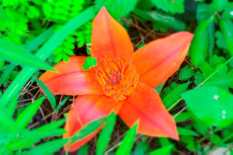 Ngắm hoa gạo đỏ rực trong rừng Cúc Phương - 2