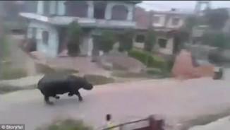 Tê giác 2,2 tấn đuổi sầm sập theo xe máy ở Nepal