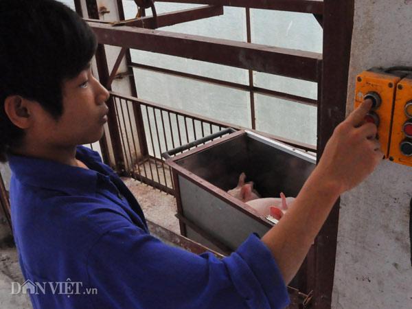 Trung Quốc bắt đầu mua lợn trở lại, giá lợn miền Bắc tăng 3.000đ/kg - 4