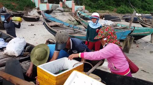 Đến Cửa Tùng săn tôm hùm, kiếm tiền triệu mỗi ngày - 5