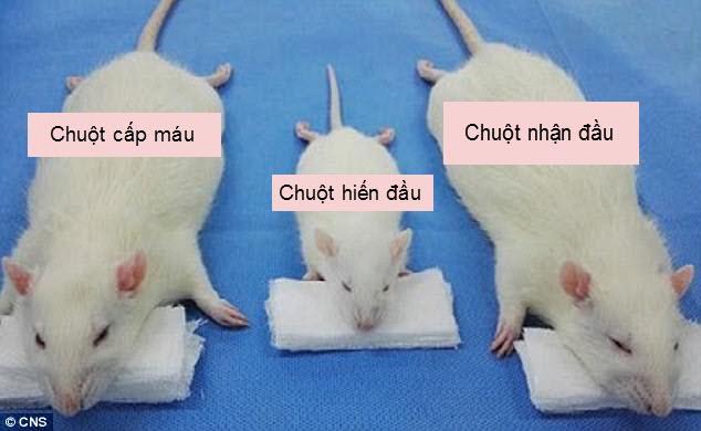 TQ: Ghép thành công đầu chuột, sắp ghép đầu người - 1