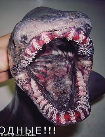 Những thủy quái đại dương kinh dị nhất thế giới - 9