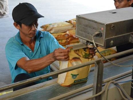Hạt gạo Việt Nam bị chê - 1
