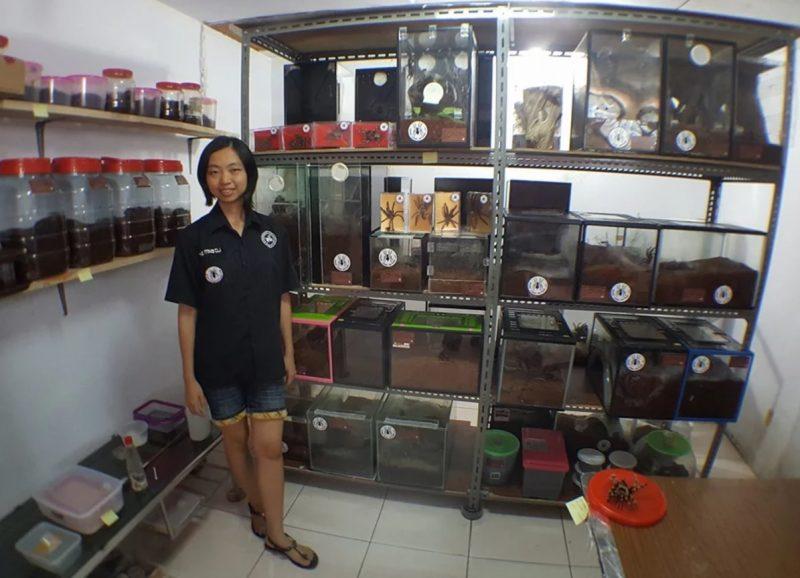 """Cô gái Indonesia """"nghiện"""" chung sống với 1500 con nhện độc - 1"""