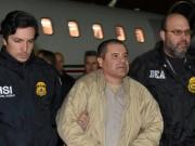Mexico: Không ai thu nổi 1 xu từ trùm ma túy Chuột chũi